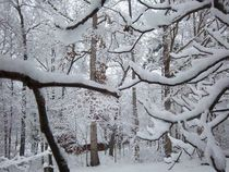 Snowy Branches by Thomas Elfers