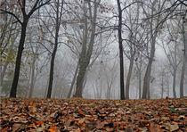 Forest in Fog by Dejan Knezevic