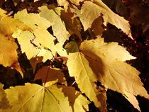 Fall Yellows - Oak by Thomas Elfers
