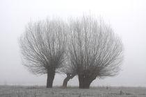 Kopfweiden bei Frost und Nebel 28 von Karina Baumgart