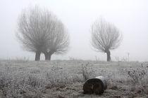 Kopfweiden bei Frost und Nebel 27 von Karina Baumgart
