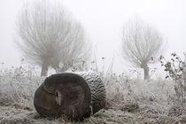 Kopfweiden bei Frost und Nebel 25 von Karina Baumgart