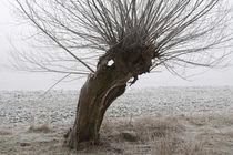 Kopfweiden bei Frost und Nebel 24 von Karina Baumgart