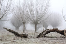 Kopfweiden bei Frost und Nebel 23 by Karina Baumgart