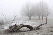 Kopfweiden bei Frost und Nebel 22 von Karina Baumgart