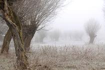Kopfweiden bei Frost und Nebel 21 von Karina Baumgart