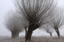 Kopfweiden bei Frost und Nebel 20 by Karina Baumgart