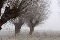 Kopfweiden bei Frost und Nebel 17 von Karina Baumgart