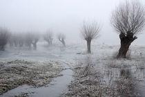 Kopfweiden bei Frost und Nebel 16 von Karina Baumgart