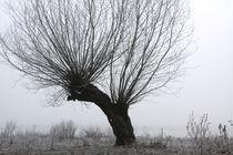 Kopfweiden bei Frost und Nebel 15 von Karina Baumgart