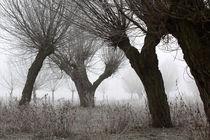 Kopfweiden bei Frost und Nebel 14 von Karina Baumgart
