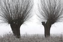 Kopfweiden bei Frost und Nebel 13 von Karina Baumgart