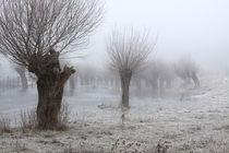 Kopfweiden bei Frost und Nebel 12 von Karina Baumgart