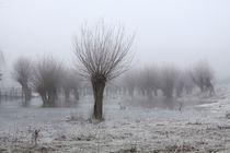 Kopfweiden bei Frost und Nebel 11 von Karina Baumgart