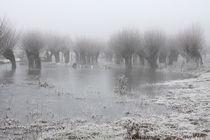 Kopfweiden bei Frost und Nebel 10 von Karina Baumgart