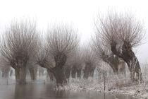 Kopfweiden bei Frost und Nebel 09 von Karina Baumgart