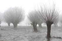 Kopfweiden bei Frost und Nebel 08 von Karina Baumgart