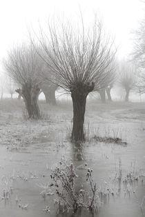 Kopfweiden bei Frost und Nebel 07 von Karina Baumgart