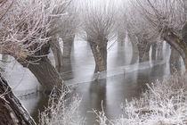 Kopfweiden bei Frost und Nebel 06 von Karina Baumgart