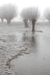 Kopfweiden bei Frost und Nebel 05 by Karina Baumgart