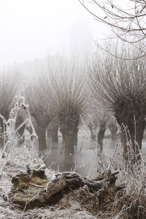 Kopfweiden bei Frost und Nebel 03 von Karina Baumgart