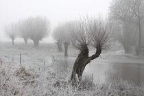 Kopfweiden bei Frost und Nebel 01 von Karina Baumgart