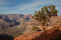 Canyon tree alive von Alexander Weigel