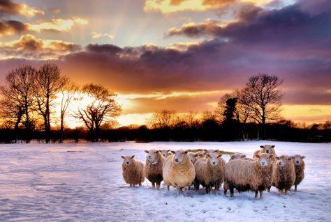Winter-woolies