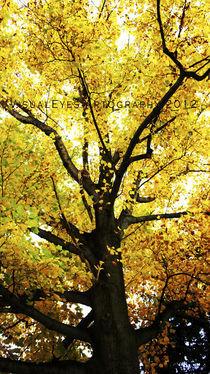 Mellow Yellow von Tracy Bittner