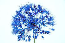 Blue Ali by Jeremy Sage