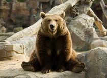 'Funny bear' by Victoria Savostianova