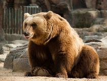 Smiling bear von Victoria Savostianova