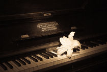 Lily on an ancient piano by Victoria Savostianova