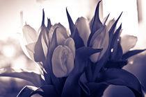 Tulips in purple tone by Victoria Savostianova
