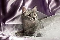 Little cat on lilac by Raffaella Lunelli