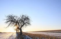 'Bäume im Licht' by Wolfgang Dufner