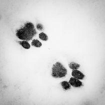 Cat tracks in the snow von tr-design