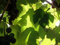 Shadow Dancing Grapes by Lainie Wrightson