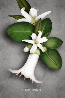 i like flowers von E-lena BonapArte
