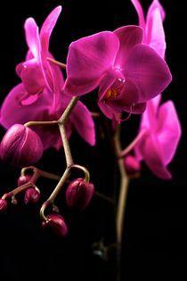 2007-10-12-orchidea04