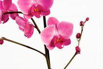 2007-10-15-orchidea01