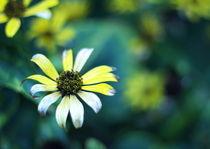 Searing flowers von Levente Bodo