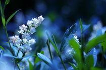Blue Wonderland von Levente Bodo