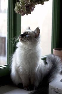Ral-raffaellalunelli-cat-iri-veranda