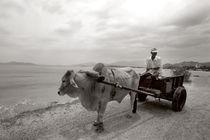 waterbuffalo - Vietnam von captainsilva
