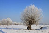 Kopfweiden im Winterkleid 15 von Karina Baumgart