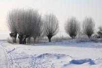 Kopfweiden im Winterkleid 13 von Karina Baumgart