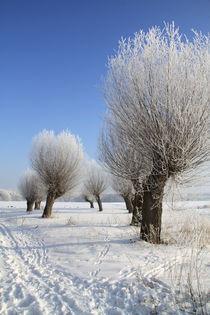 Kopfweiden im Winterkleid 09 von Karina Baumgart