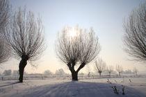 Kopfweiden im Winterkleid 07 von Karina Baumgart