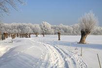 Kopfweiden im Winterkleid 06 von Karina Baumgart